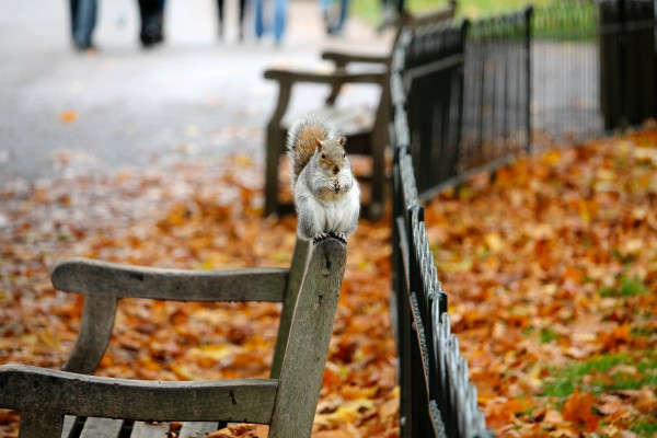 animal-autumn-bench-600x400.jpg